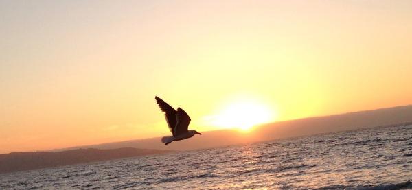 Foto mía, tomada en Viña del Mar en enero de 2016.